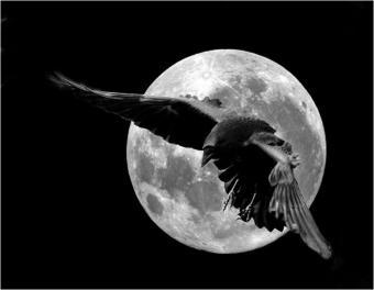 le-corbeau